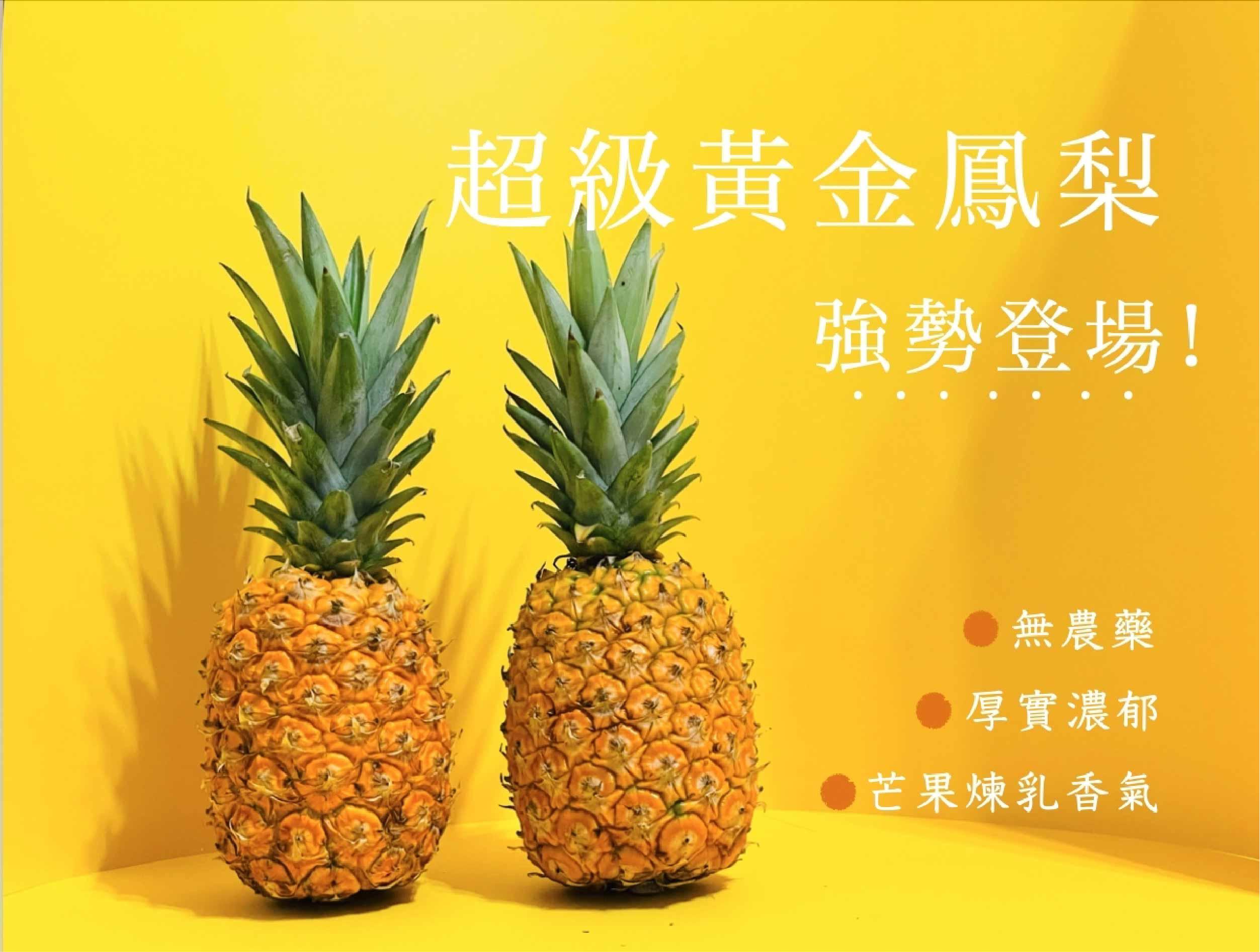 超級黃金鳳梨 (10月)